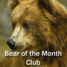 Bear of the Month